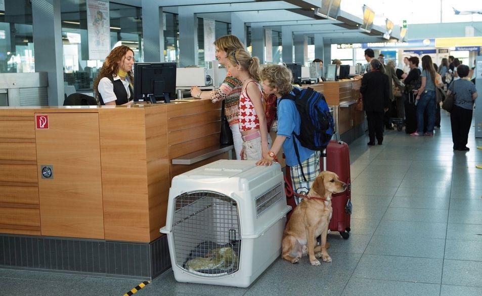 перевозка животных в самолете по россии