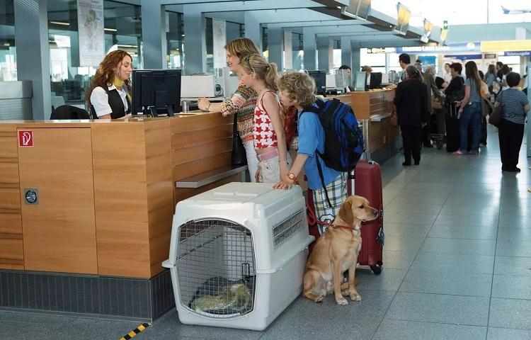 Перевозка сабаки в самолете