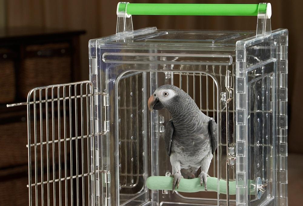 Провоз птицы самолетом