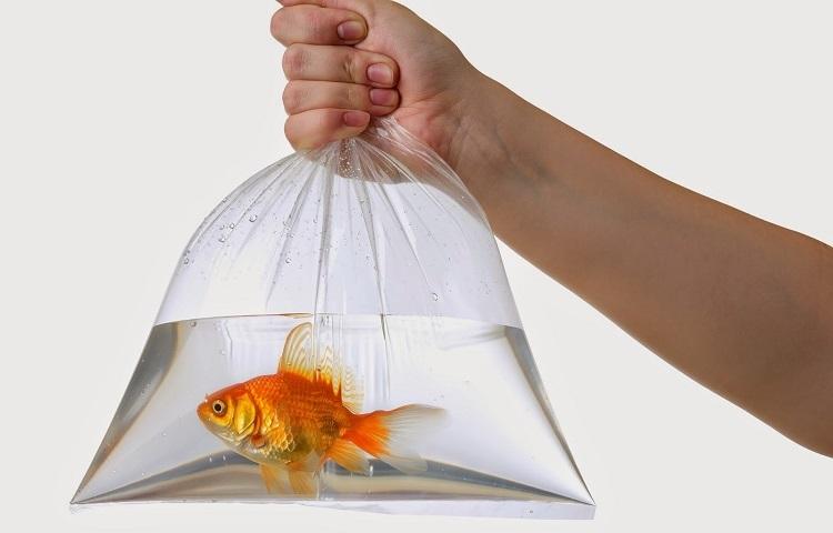 Провоз аквариумной рыбки в лайнере