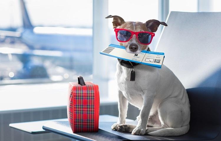 Провоз собаки в самолете Аэрофлот