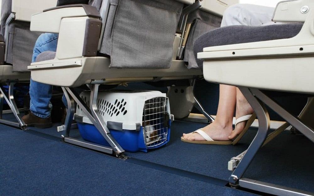 Транспортировка собаки в салоне лайнера