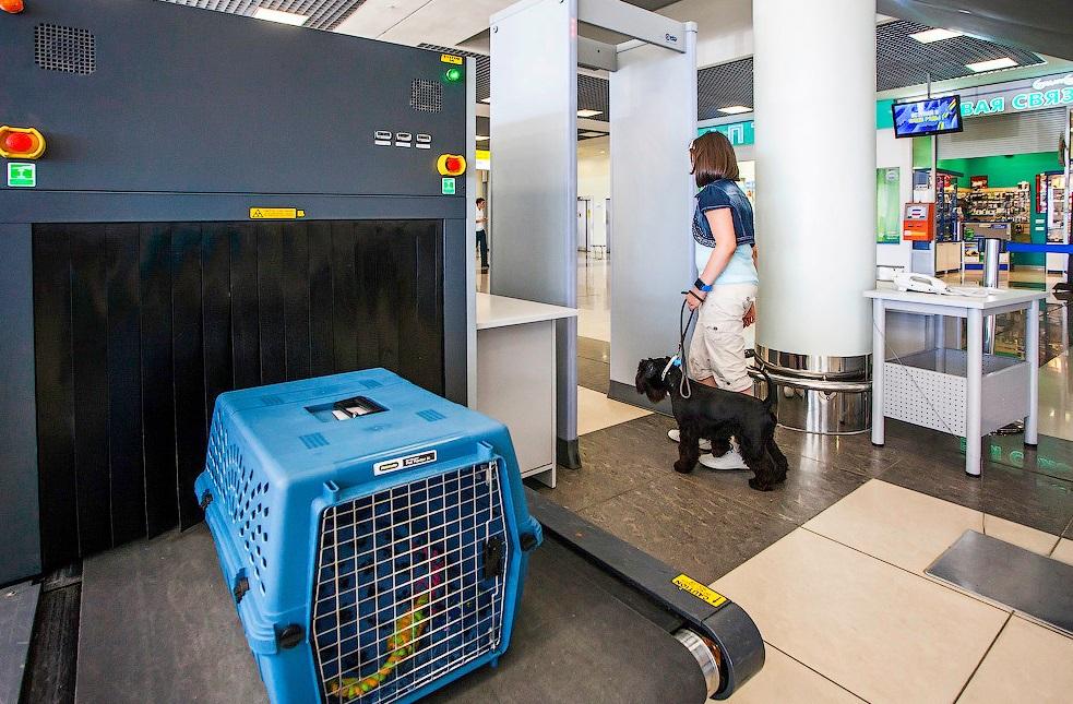 Перевоз собаки в самолете за границу