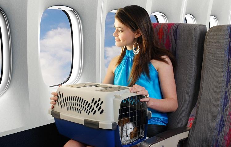 Транспортировкой домашних животных в ЮТэйр