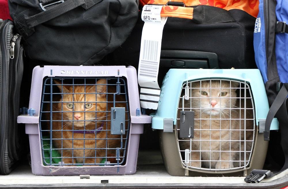 Контейнер для перевозки животных в самолете