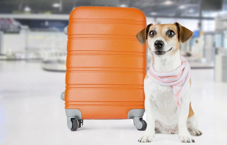 Транспортировка домашних питомцев в самолете Белавиа
